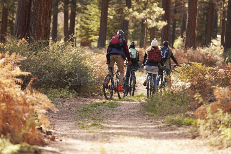 Grupo de amigos que montan las bicis en un rastro del bosque, visión trasera foto de archivo libre de regalías
