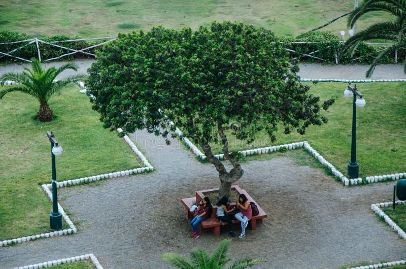 Grupo de amigos três mulheres, sentando-se no banco no parque que olha separadamente seus telefones que afrouxam uma comunicação fotografia de stock