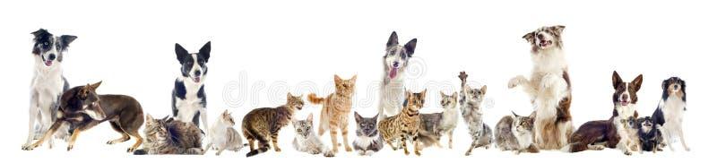 Grupo de animais de estimação fotografia de stock royalty free