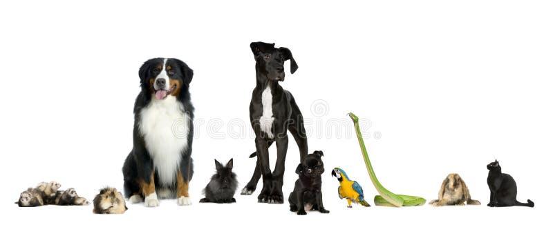 Grupo de animais de estimação - cão, gato, pássaro, réptil, coelho, f fotografia de stock royalty free