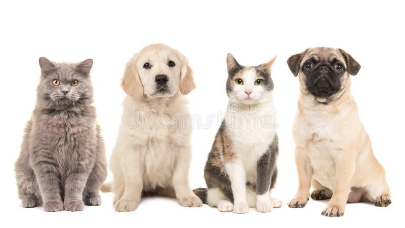 Grupo de animais de estimação, de cães de cachorrinho e de gatos adultos
