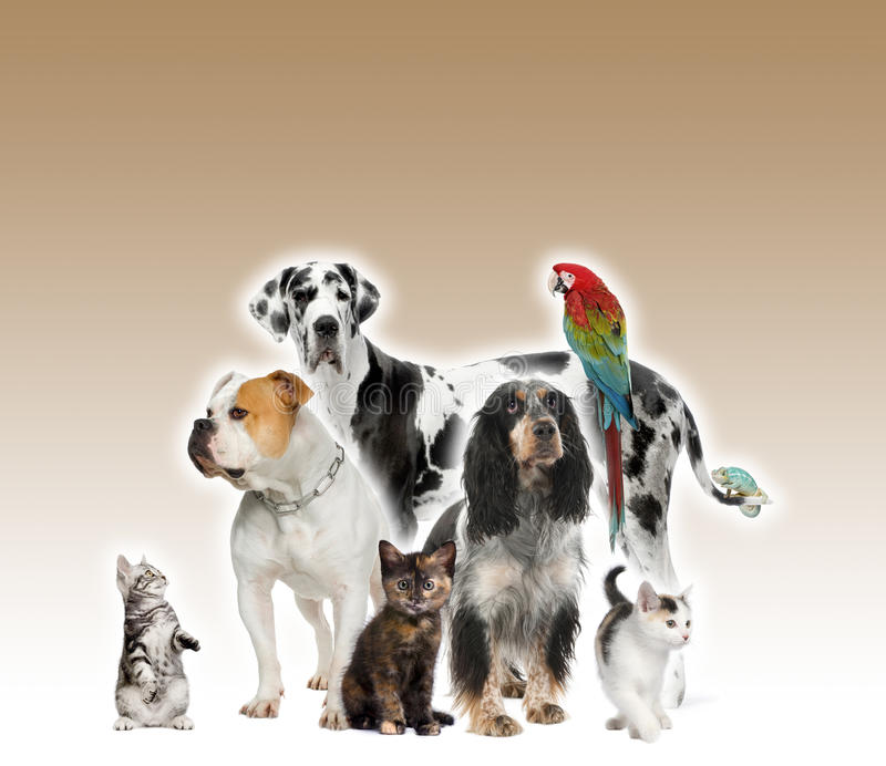 Grupo de animais de estimação que estão o fundo do marrom do agaisnt foto de stock royalty free