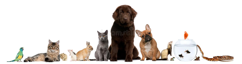 Grupo de animais de estimação que sentam-se na frente do fundo branco fotografia de stock royalty free