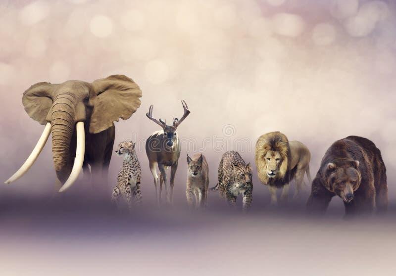 Grupo de animais selvagens fotografia de stock royalty free