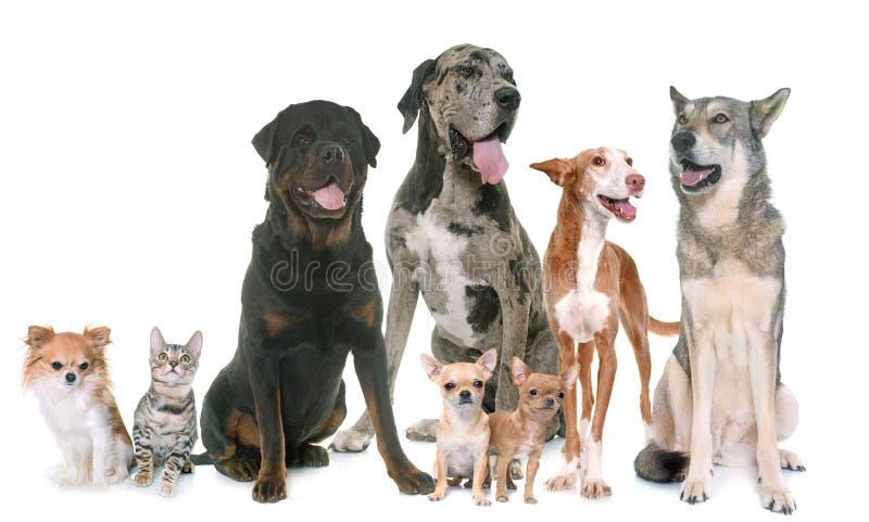 Grupo de animal doméstico foto de archivo