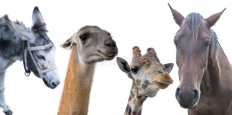 Grupo de animales fotografía de archivo