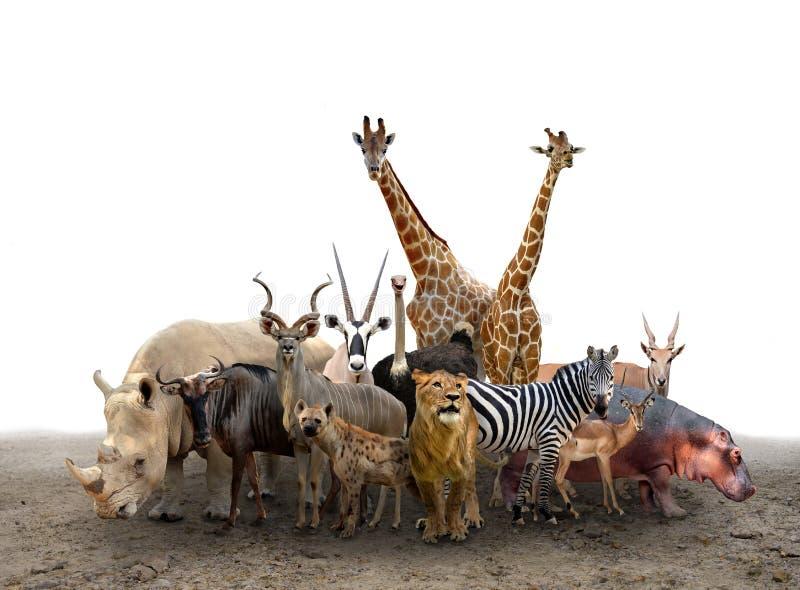Grupo de animales de África imagenes de archivo