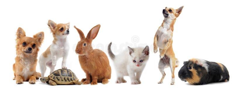 Grupo de animales domésticos fotos de archivo