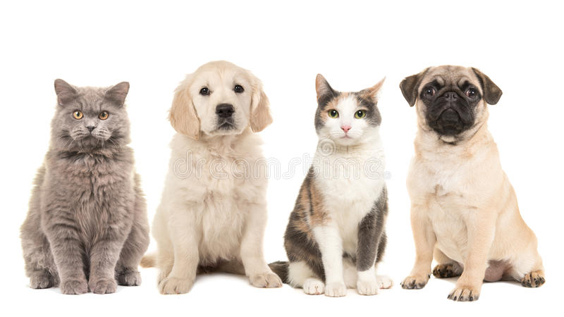 Grupo de animales domésticos, de perros de perrito y de gatos adultos imagen de archivo
