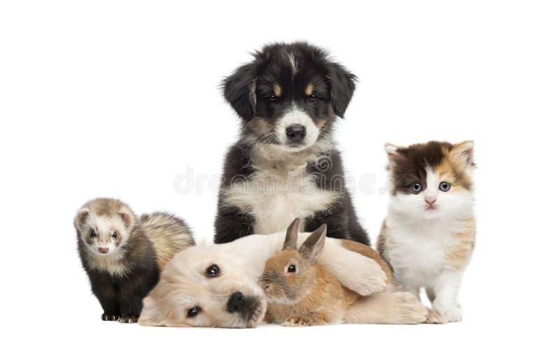 Grupo de animales domésticos jovenes fotografía de archivo libre de regalías