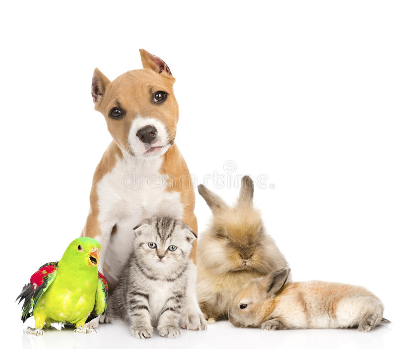 Grupo de animales domésticos junto en frente Aislado en el fondo blanco imagen de archivo