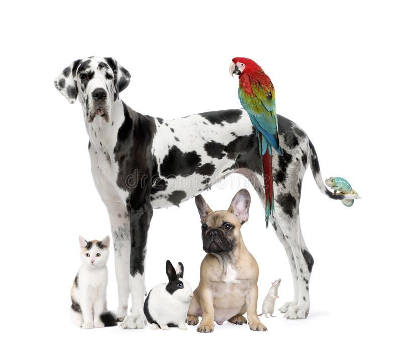 Grupo de animales domésticos - perro, gato, pájaro, reptil, conejo imagen de archivo