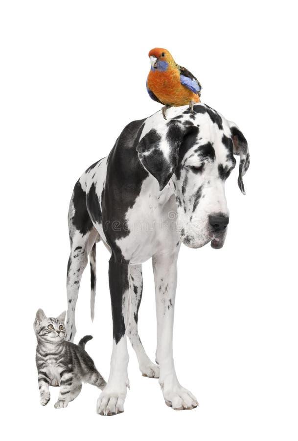 Grupo de animales domésticos: perro, pájaro, gato fotografía de archivo