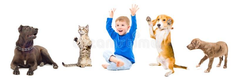 Grupo de animales domésticos y niño imagenes de archivo