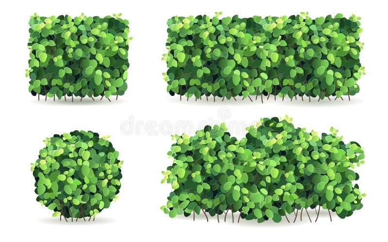 Grupo de arbustos com as folhas verdes de formas diferentes ilustração stock
