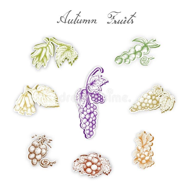 Grupo de Autumn Fruits com arte do corte do papel ilustração royalty free