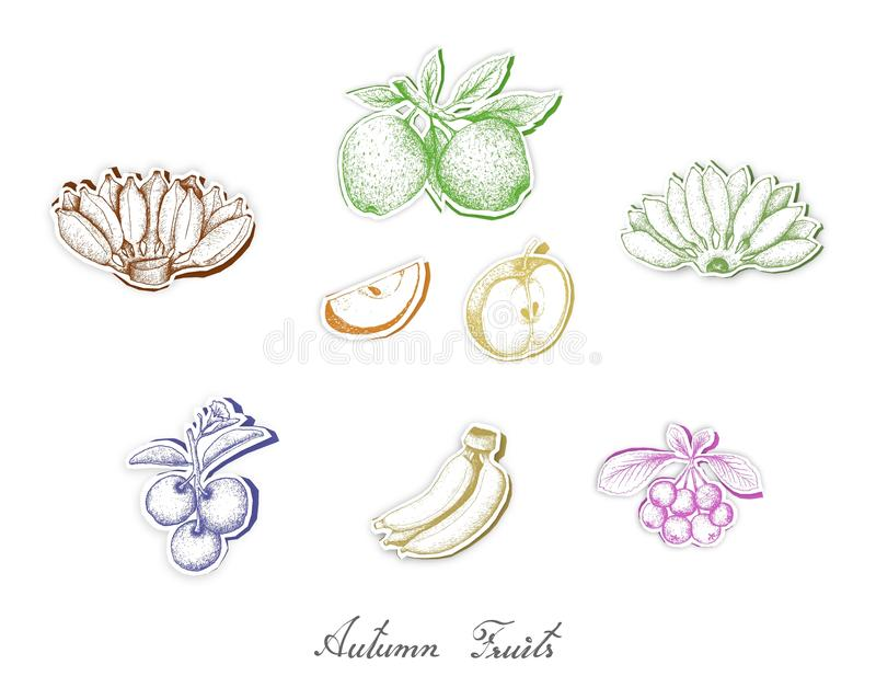 Grupo de Autumn Fruits com arte do corte do papel ilustração do vetor