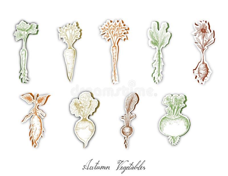 Grupo de Autumn Root Vegetables com arte do corte do papel ilustração do vetor