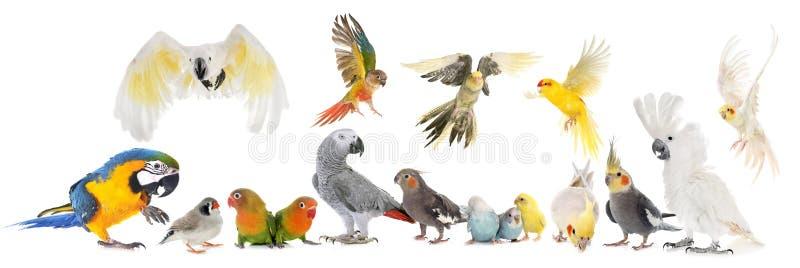 Grupo de aves fotos de archivo libres de regalías