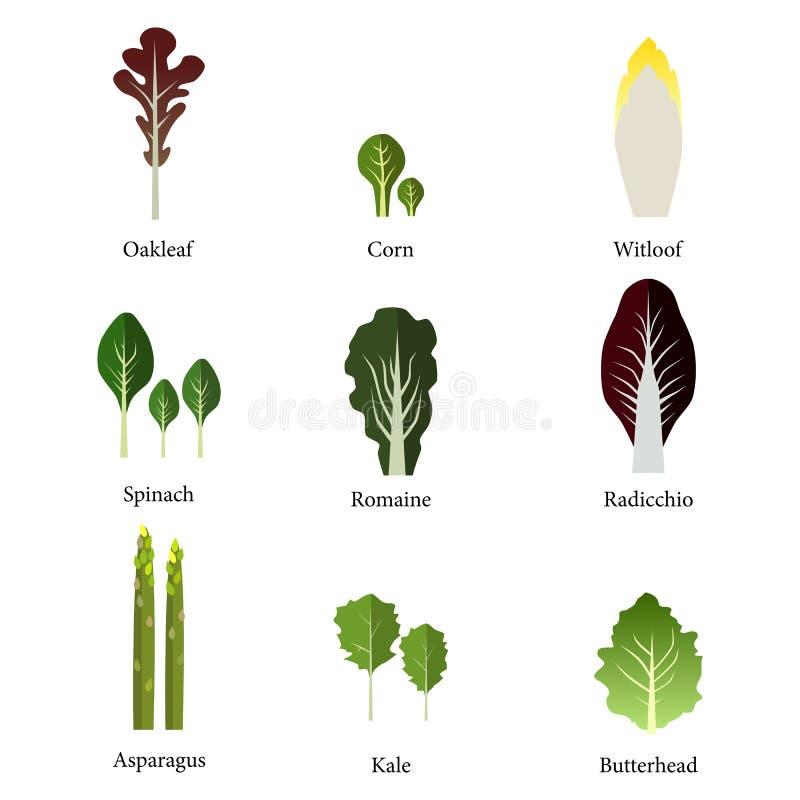 Grupo de bacia de salada verde dos legumes com folhas vetor download grupo de bacia de salada verde dos legumes com folhas vetor ilustrao do vetor ccuart Image collections