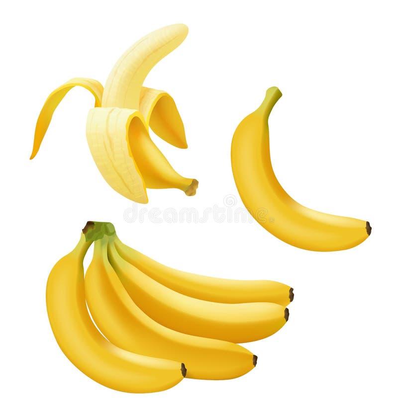 Grupo de banana realística do vetor, de ramo das bananas, de meia banana descascada e única isolada no branco ilustração do vetor