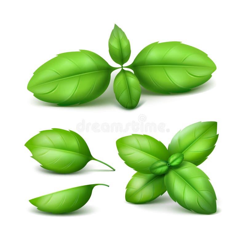 Grupo de Basil Leaves Close verde acima do fundo ilustração do vetor