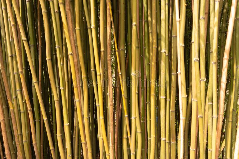 Grupo de bastones de bambú para un fondo fotografía de archivo