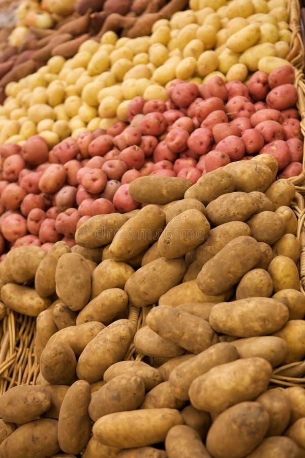 Grupo de batatas imagens de stock
