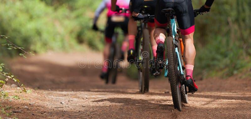 Grupo de biking de montanha dos atletas na fuga da floresta fotografia de stock royalty free