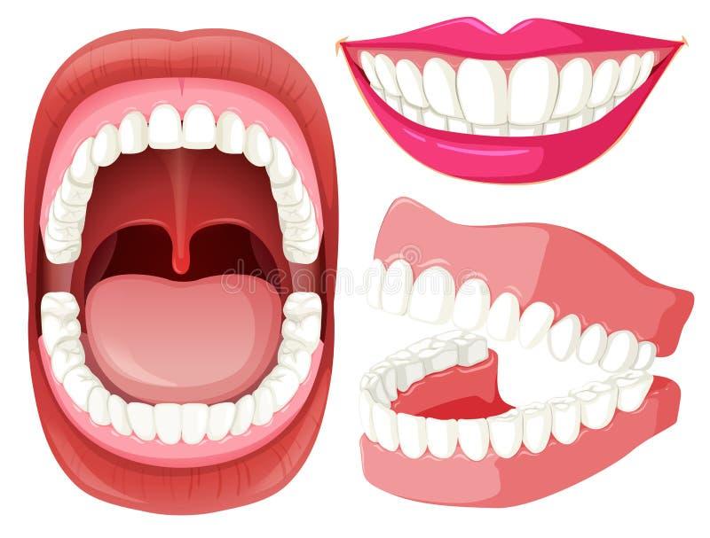 Grupo de boca e de dentes ilustração royalty free