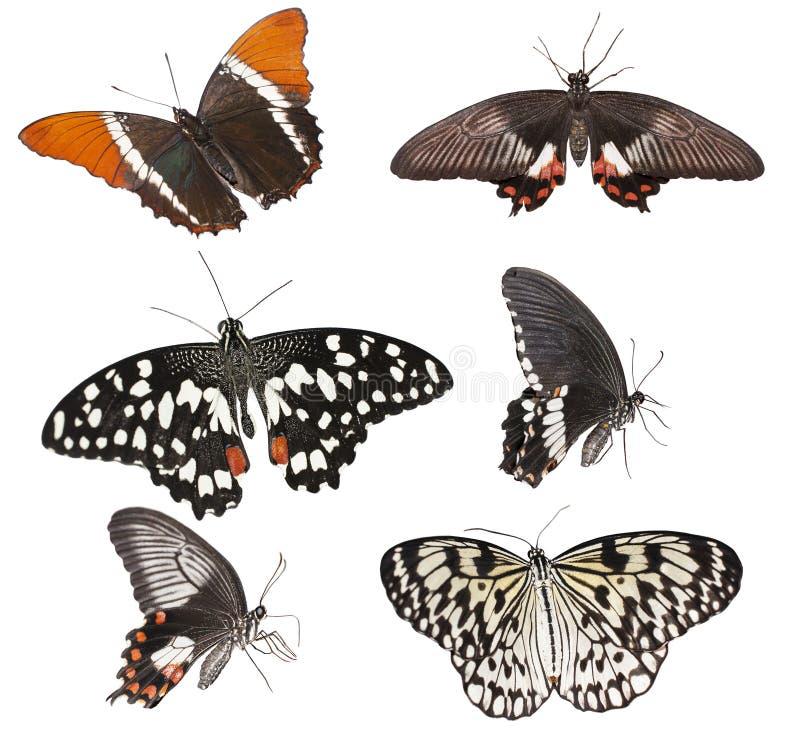 Grupo de borboletas imagem de stock royalty free
