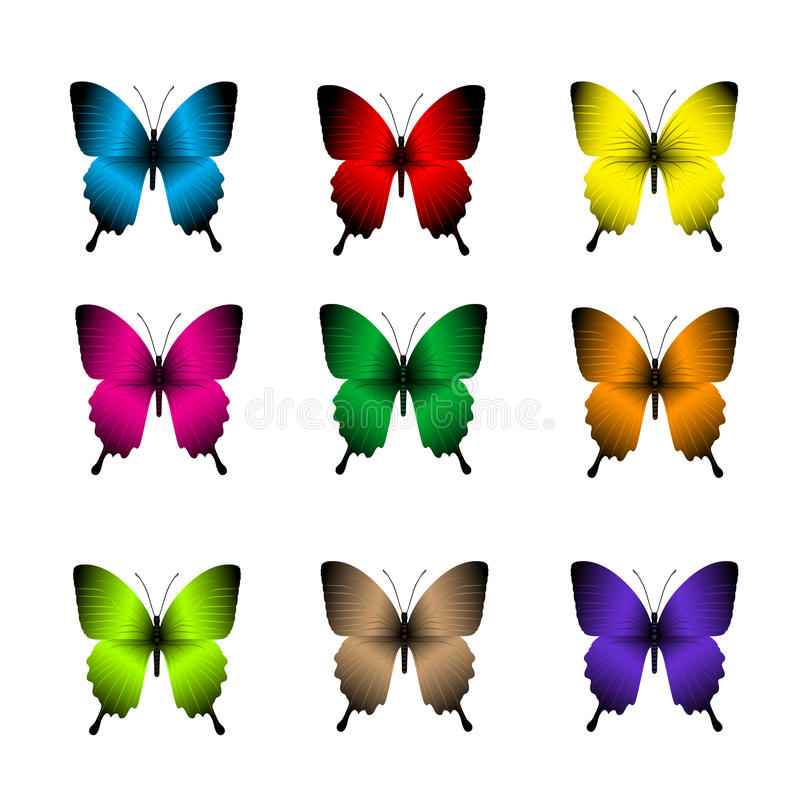 Grupo de borboletas coloridas realísticas isoladas para a mola ilustração do vetor