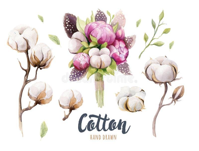 Grupo de cápsula, de peônias e de penas tiradas mão do algodão do watercolour ilustração royalty free