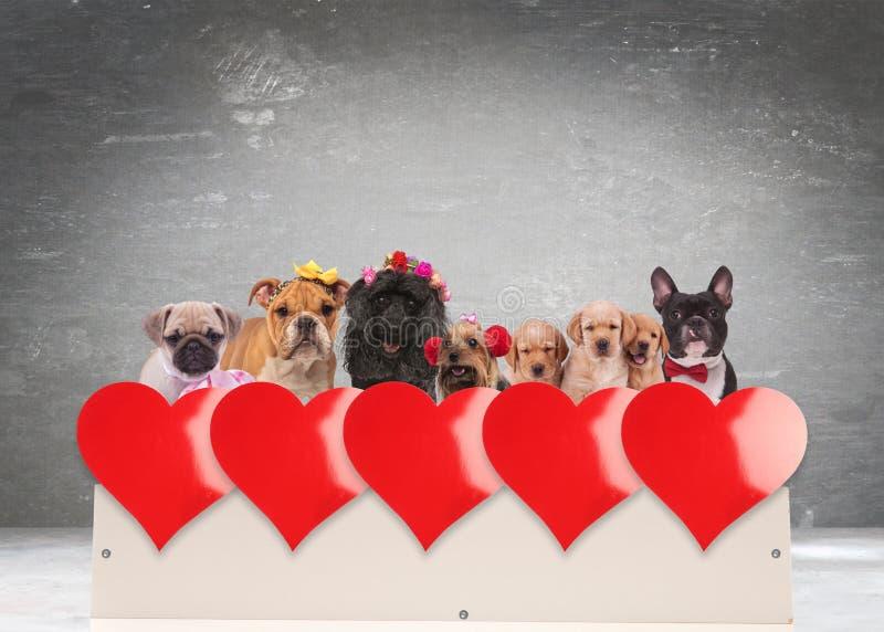 Grupo de cães adoráveis que comemoram o dia do ` s do Valentim fotos de stock royalty free