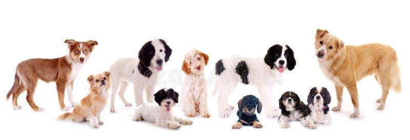 Grupo de cães diferentes imagem de stock