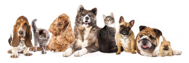 Grupo de cães e gato fotografia de stock royalty free