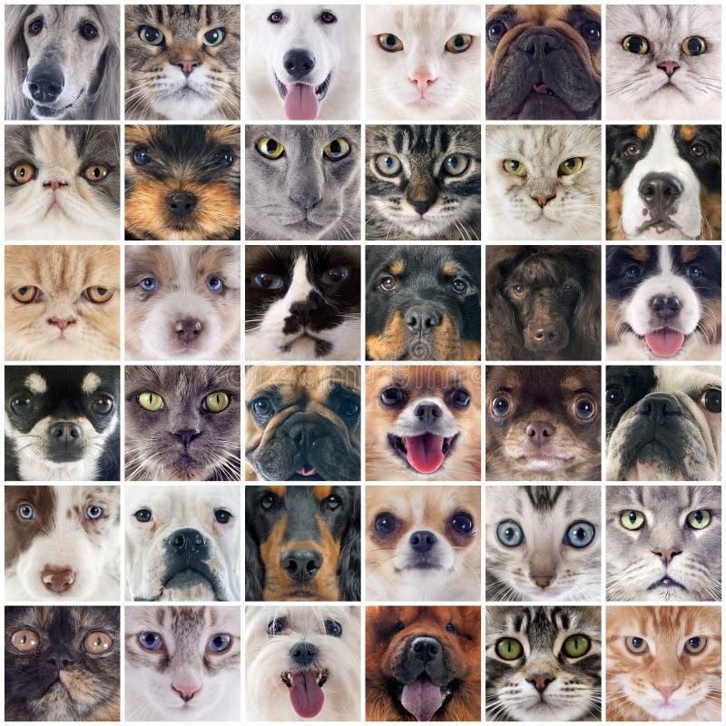 Grupo de cães e gato imagem de stock