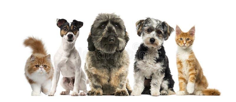 Grupo de cães e gato imagens de stock