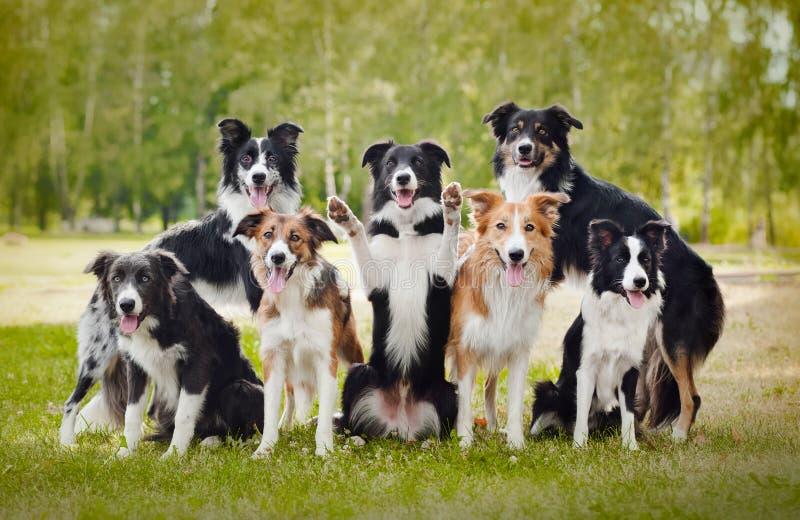 Grupo de cães felizes fotografia de stock royalty free