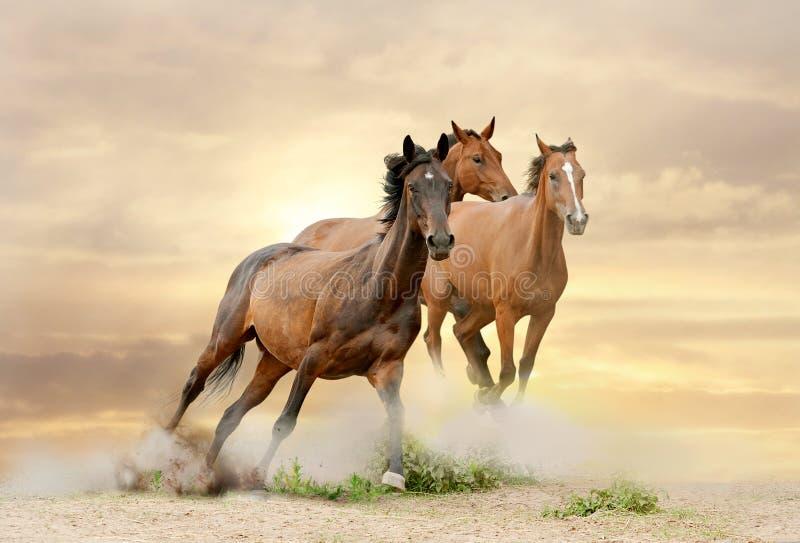 grupo de caballos fotos de archivo libres de regalías