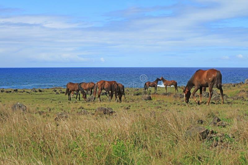 Grupo de caballos salvajes que pastan en la playa del Océano Pacífico en la isla de pascua, Chile, Suramérica imagenes de archivo
