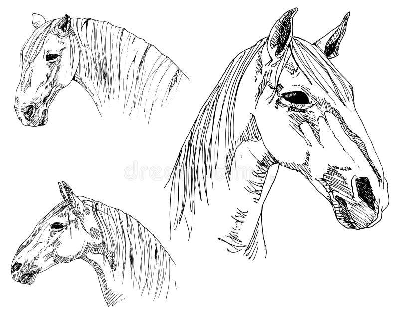 Grupo de cabeça de cavalos tirada mão ilustração royalty free