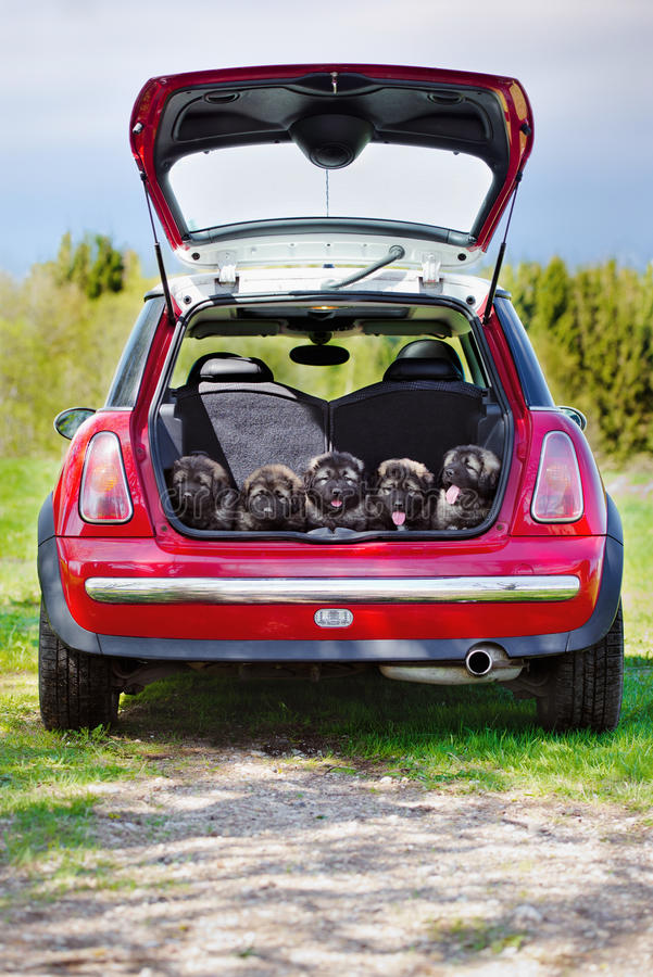 Grupo de cachorrinhos em um tronco de carro imagem de stock royalty free
