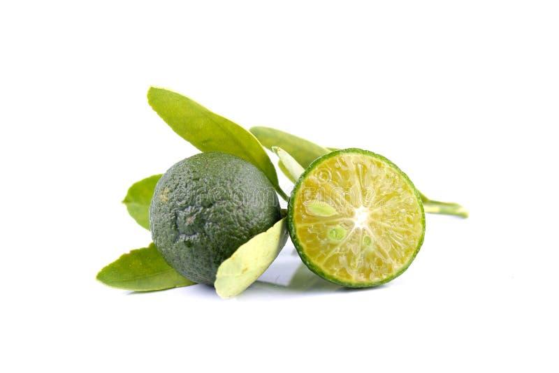 Grupo de calamondin verde y de hoja usados en vez del limón aislado en el fondo blanco imagen de archivo