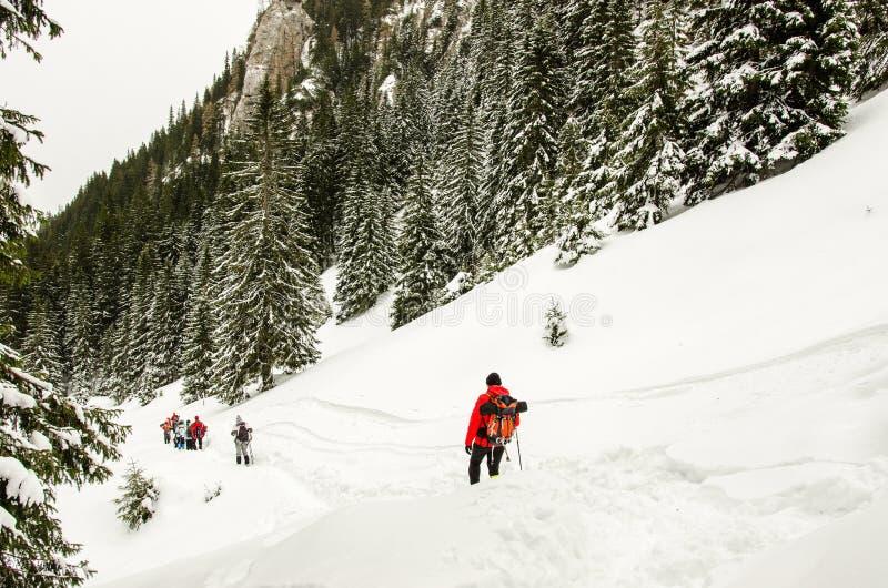Grupo de caminhantes em montanhas Carpathian fotografia de stock royalty free