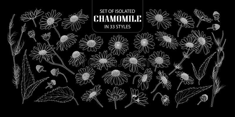 Grupo de camomila isolada em 33 estilos ilustração stock