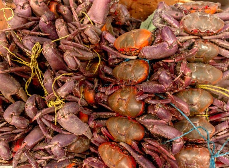 Grupo de caranguejos embalados para a venda em um mercado imagem de stock royalty free
