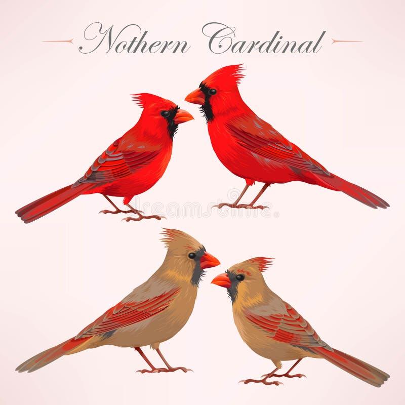 Grupo de cardeais do norte ilustração royalty free