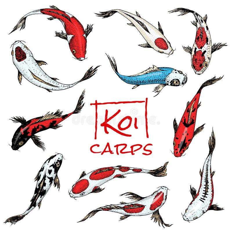 Grupo de carpas de Koi, peixes japoneses animais coreanos coloridos Linha tirada mão gravada esboço monocromático da tatuagem do  ilustração stock