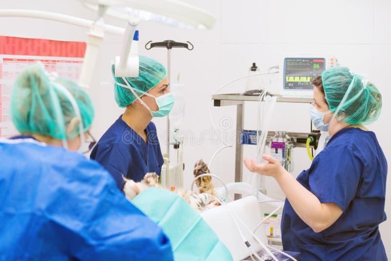 Grupo de cirurgiões veterinários no trabalho fotos de stock royalty free